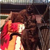 Adopt A Pet :: Dahlia and Iris - Vero Beach, FL