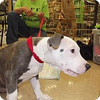 Adopt A Pet :: Kinsey - Silsbee, TX