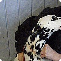 Adopt A Pet :: Spirit - Middletown, PA