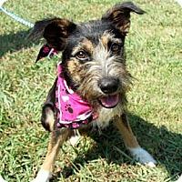 Adopt A Pet :: FANCY - Glastonbury, CT
