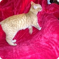 Adopt A Pet :: Valerie - Simpsonville, SC