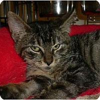 Adopt A Pet :: Rolleston - lake elsinore, CA