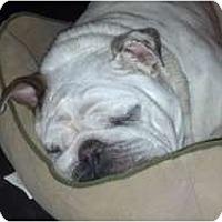 Adopt A Pet :: Spanky - conyers, GA