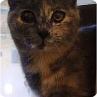 Adopt A Pet :: Peaches - Albany, NY
