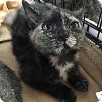 Adopt A Pet :: Tanya - East Hanover, NJ