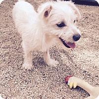 Adopt A Pet :: Nene - North Hollywood, CA