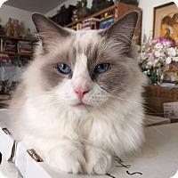 Adopt A Pet :: Bailey - Davis, CA