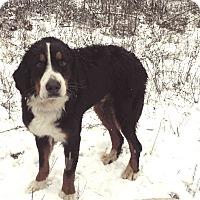 Adopt A Pet :: Eddie - Post Falls, ID