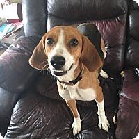 Adopt A Pet :: Diamond - Woodbridge, VA