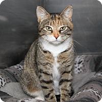 Adopt A Pet :: Jezebel (aka Jezzy) - Marietta, OH