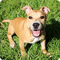 Adopt A Pet :: Gilligan~meet me~` - Glastonbury, CT