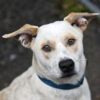Adopt A Pet :: Ralphy - Chattanooga, TN