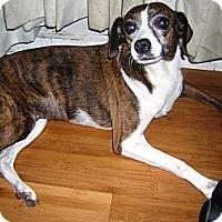 Adopt A Pet :: RUBY - Hollywood, FL