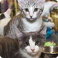Adopt A Pet :: Dexie - Irvine, CA
