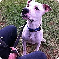 Adopt A Pet :: Carlton - Ojai, CA