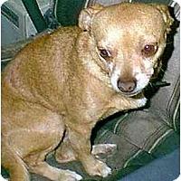 Adopt A Pet :: Marvin - dewey, AZ