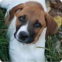 Adopt A Pet :: Pete - Glastonbury, CT