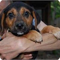Adopt A Pet :: Willie - Douglasville, GA