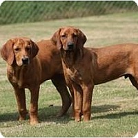 Adopt A Pet :: Rusty - Fort Hunter, NY