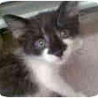 Adopt A Pet :: Basil - Proctor, MN