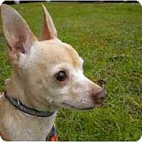Adopt A Pet :: Jack-o - Washington, NC