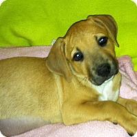Adopt A Pet :: Ina - Phoenix, AZ