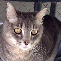 Adopt A Pet :: AA-Gracie - Tyler, TX