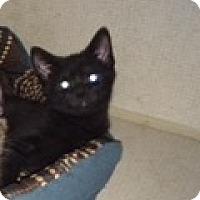 Adopt A Pet :: GALE - Hamilton, NJ