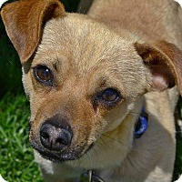 Adopt A Pet :: Rio - Meridian, ID