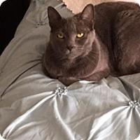 Adopt A Pet :: Gigi - Laguna Woods, CA