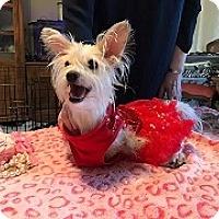 Adopt A Pet :: Hope - Mesa, AZ