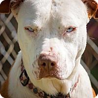 Adopt A Pet :: Daisy - Columbus, GA