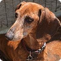 Adopt A Pet :: Slinky Salsa - Houston, TX
