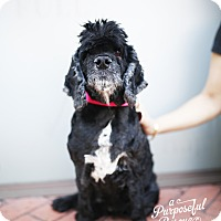 Adopt A Pet :: Bernice - Los Angeles, CA