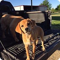 Adopt A Pet :: Rowena - Wharton, TX