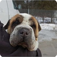 Adopt A Pet :: Boris - Newport, VT
