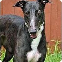 Adopt A Pet :: Spirit - Canadensis, PA