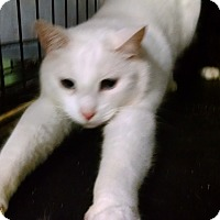 Adopt A Pet :: Pearl - Centralia, WA