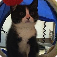 Adopt A Pet :: Dandy - Trevose, PA
