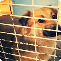 Adopt A Pet :: Axel - Odessa, TX
