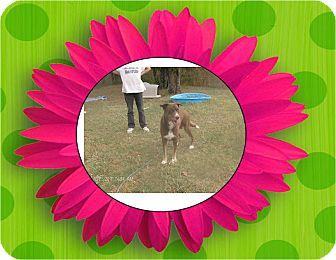 Husky/Labrador Retriever Mix Dog for adoption in KELLYVILLE, Oklahoma - KOKO