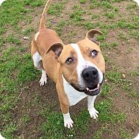Adopt A Pet :: Kernel - Chico, CA