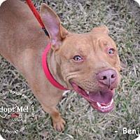 Adopt A Pet :: Benji - River Rouge, MI