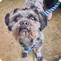 Adopt A Pet :: Pancho - Memphis, TN