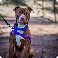 Adopt A Pet :: King - West Cornwall, CT