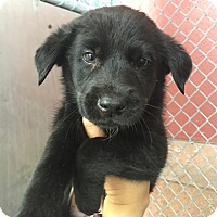 Adopt A Pet :: Bridges - Austin, TX