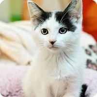 Adopt A Pet :: Spot - Montclair, CA