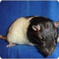 Adopt A Pet :: Chance - Winner, SD