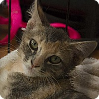 Adopt A Pet :: Pixie and Star - Norman, OK