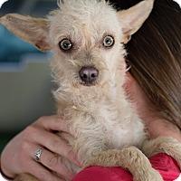 Adopt A Pet :: Cantaloupe - Mission Viejo, CA